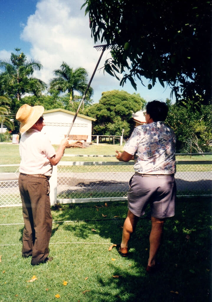 1997: Collecting mangoes with friend Ted, Rockhampton. Photo source: Salecich Family archives.