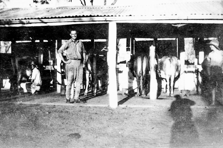 1930s. Beaumont family milking sheds at Rannes, Central Queensland. Photo source: Beaumont Family archives.