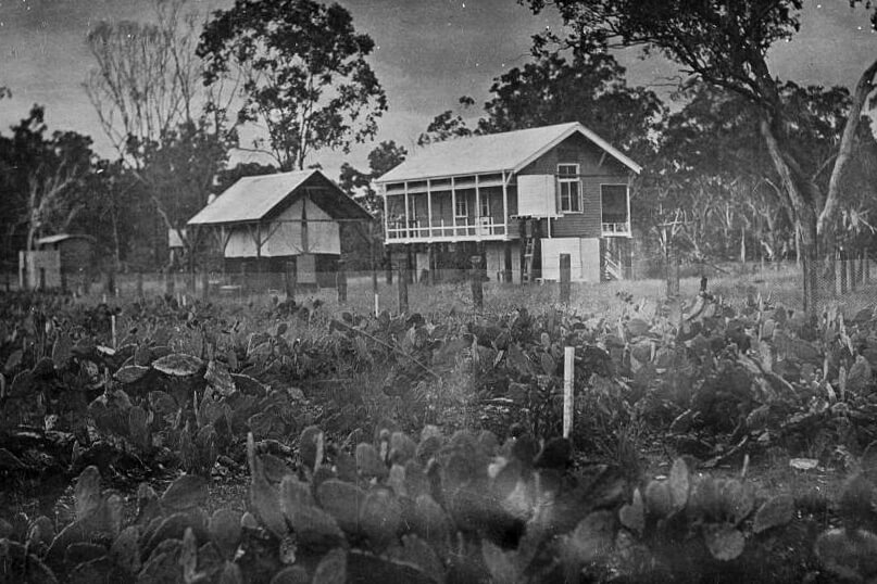 c. 1913. The research station at Dulacca, southern Queensland. Photo source: State Library of Queensland. Public domain.