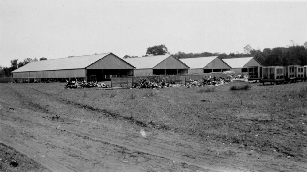 c. 1930. The Prickly Pear Experimental Field Station, Chinchilla, Queensland. Photo source: State Library of Queensland. Public domain.