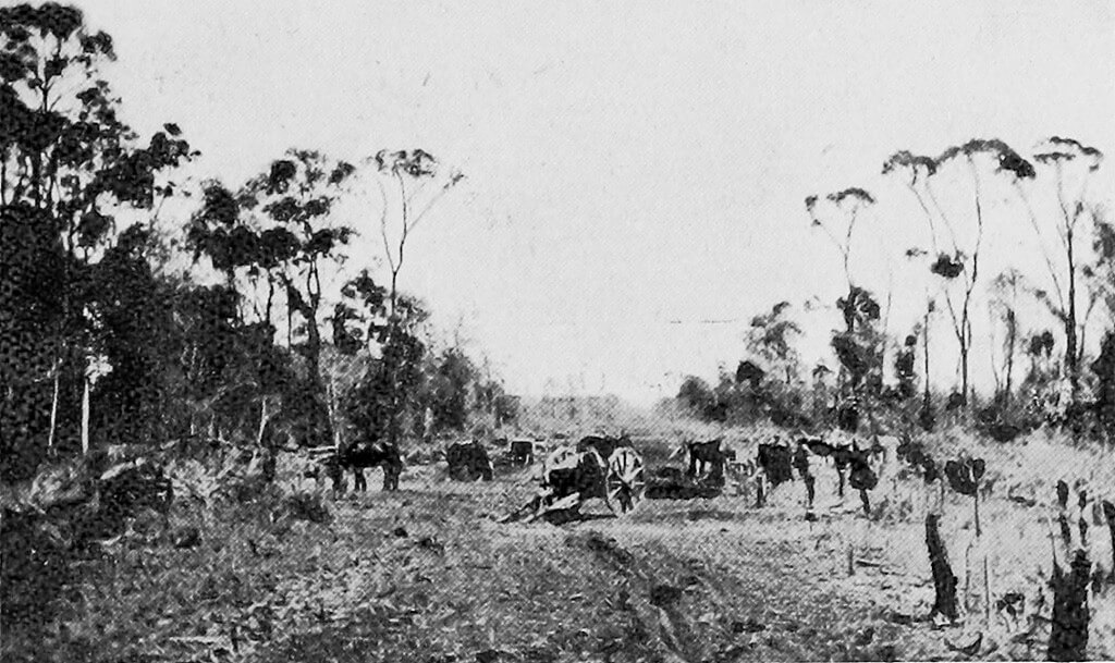 c. 1922. Clearing dense scrub near Rannes for the Rannes-Monto railway line. Photo source: State Library of Queensland. Public domain.