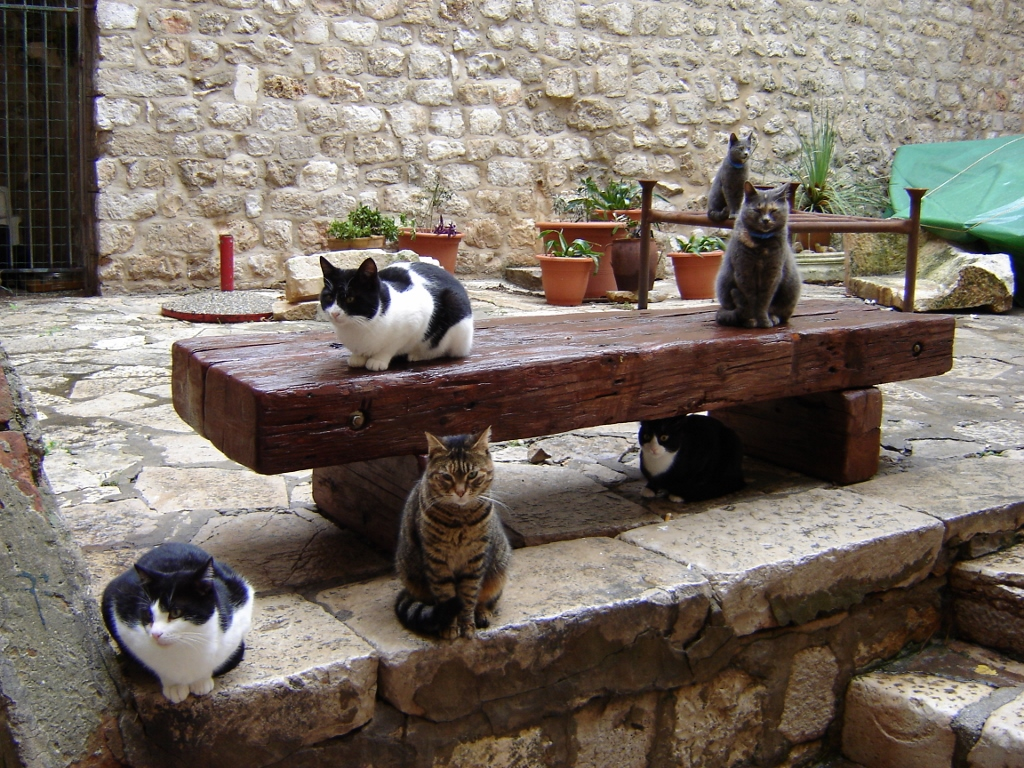 Cats on the Dubrovnik Wall Walk