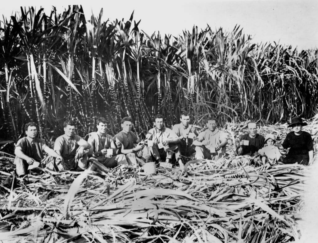 1923. Italian sugarcane cutters, Innisfail district, Queensland. Photo source: State Library of Queensland. Public domain.